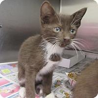 Adopt A Pet :: Alpine $60 - North Richland Hills, TX