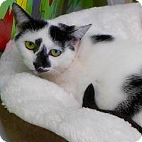 Adopt A Pet :: C-68517 Isabel - Westampton, NJ