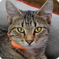 Adopt A Pet :: Allie - Wichita, KS