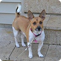 Adopt A Pet :: Emalyn - Fairfield, OH