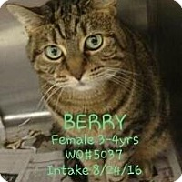 Adopt A Pet :: Berry - Fayetteville, WV