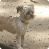 Terrier (Unknown Type, Small) Mix Dog for adoption in Syacuse, New York - Elvis