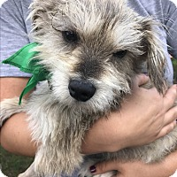 Adopt A Pet :: Seuss - San Diego, CA