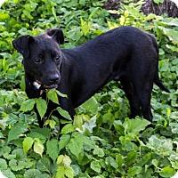 Adopt A Pet :: Marty - Fairfax, VA