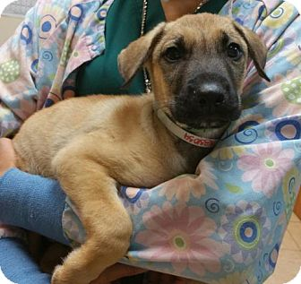 German Shepherd Dog Mix Dog for adoption in West Palm Beach, Florida - Bubba