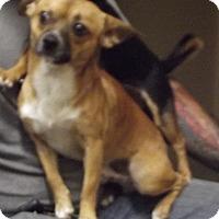 Adopt A Pet :: Mojo - Cheboygan, MI