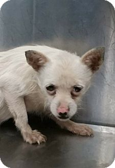 Terrier (Unknown Type, Medium) Mix Dog for adoption in Summerville, South Carolina - Tiny