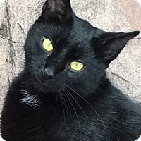Adopt A Pet :: BooCP - Carlisle, PA