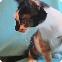 Adopt A Pet :: Confetti - Staunton, VA