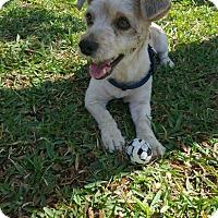 Adopt A Pet :: Dusty - Windermere, FL