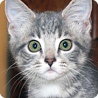 Adopt A Pet :: Fiona - Irvine, CA