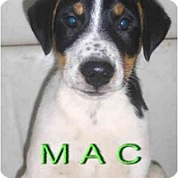 Adopt A Pet :: Mac - Toronto/Etobicoke/GTA, ON