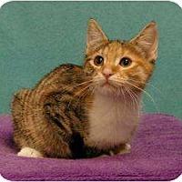 Adopt A Pet :: Elizabeth - Sacramento, CA