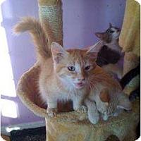 Adopt A Pet :: Burt - Mobile, AL