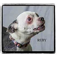 Adopt A Pet :: Ruby - Warren, PA