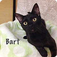 Adopt A Pet :: Bart - Foothill Ranch, CA