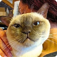Adopt A Pet :: Beanie - Davis, CA