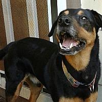 Adopt A Pet :: Buddy Boy - Tampa, FL