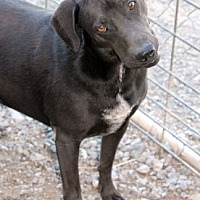Adopt A Pet :: Sam - Shelbyville, TN