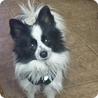 Adopt A Pet :: Dundee - conroe, TX