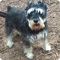 Adopt A Pet :: Skylar - Oak Ridge, NJ