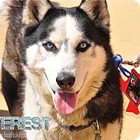 Adopt A Pet :: Everest - Carrollton, TX