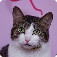 Adopt A Pet :: Mimi - Albany, NY