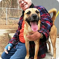 Adopt A Pet :: Kris - Smart and Sporty! - Decatur, GA
