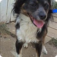 Adopt A Pet :: Demetrius - Encino, CA
