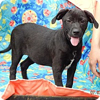Adopt A Pet :: Angel (12 lb) Video! - SUSSEX, NJ