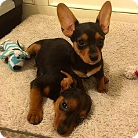 Adopt A Pet :: Hansel & Gretel - Olive Branch, MS