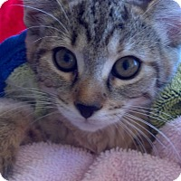 Adopt A Pet :: Sweet Pea - Scottsdale, AZ