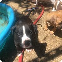 Adopt A Pet :: Rio - Joliet, IL