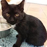 Adopt A Pet :: River - Cloquet, MN