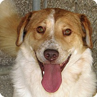 Adopt A Pet :: Queso - Ruidoso, NM