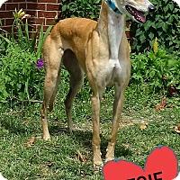 Adopt A Pet :: NB'S FANTASY - Grandville, MI