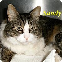 Adopt A Pet :: Sandy - El Cajon, CA