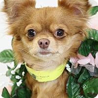Adopt A Pet :: Pola - Canton, CT