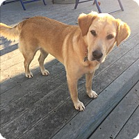 Adopt A Pet :: Buttercup - Lima, PA