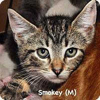 Adopt A Pet :: Smokey - West Orange, NJ