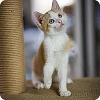 Adopt A Pet :: Meissa - Columbia, IL