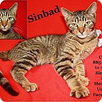 Adopt A Pet :: Sinbad - Cuba, MO