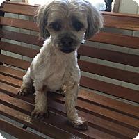 Adopt A Pet :: Sandy - Mine Hill, NJ