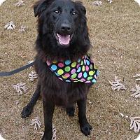 Adopt A Pet :: Lareina - Helena, AL