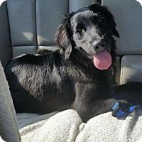 Adopt A Pet :: Frylock - Denton, TX