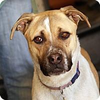 Adopt A Pet :: Issac - Palmdale, CA