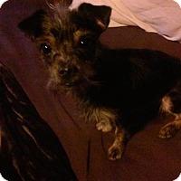 Adopt A Pet :: Roger #1032 - Nixa, MO