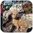 Photo 3 - Bloodhound Mix Dog for adoption in Oakland, Arkansas - Carmel
