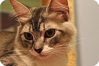 Domestic Mediumhair Kitten for adoption in Pensacola, Florida - Jellie