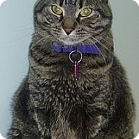 Adopt A Pet :: Anastasia Steel - Hamburg, NY